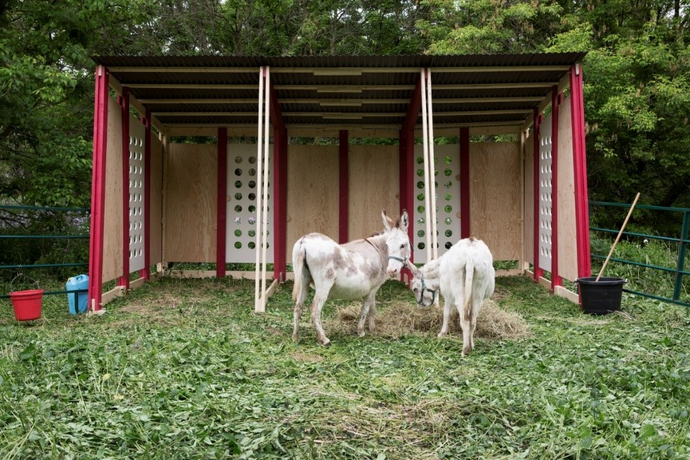 Two donkeys in the Valley stand beneath their structure.